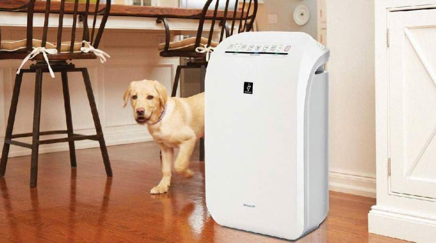 Best Air Purifiers for Dog Hair