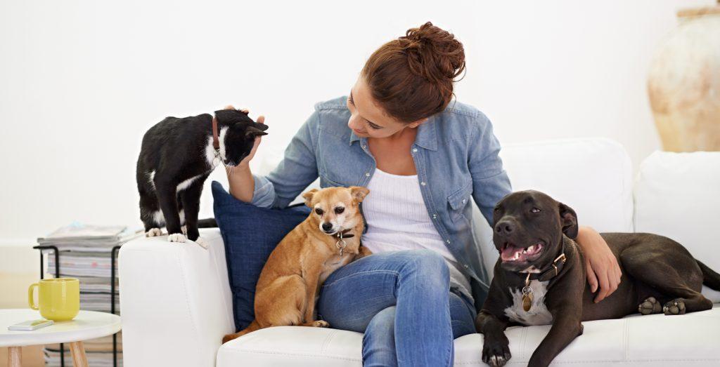 Professional Pet Sitter