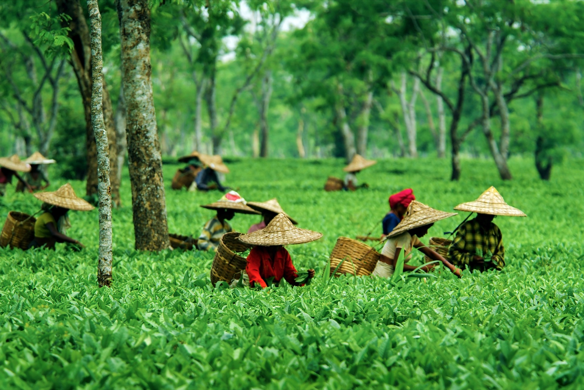 the-delightful-state-of-Assam