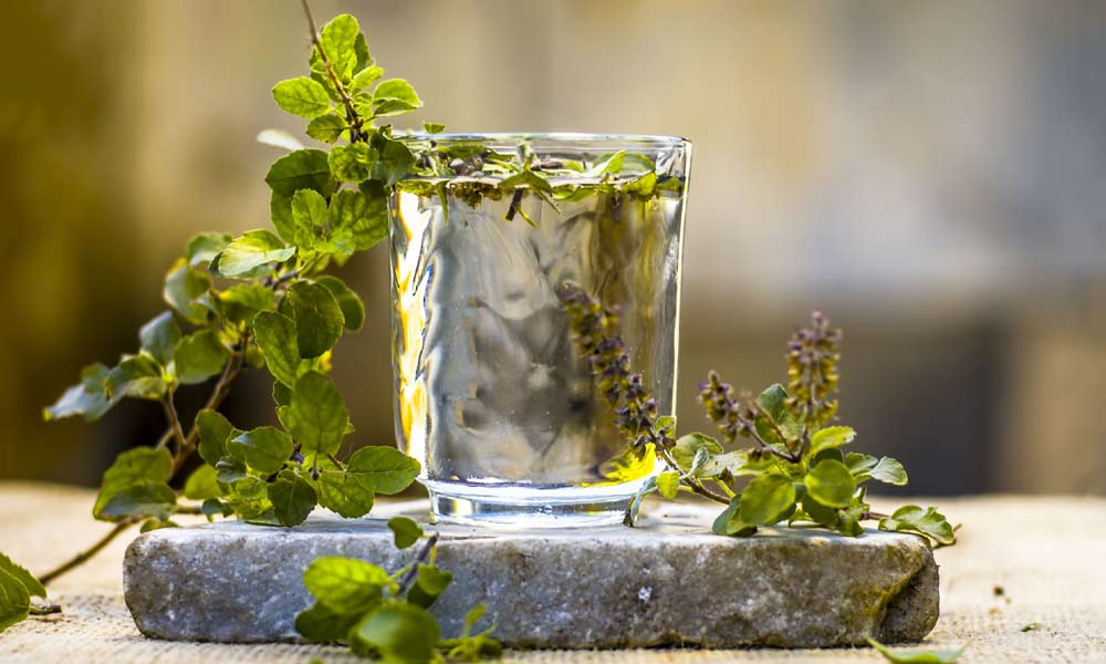 10 Health Benefits and Uses of Holy Basil