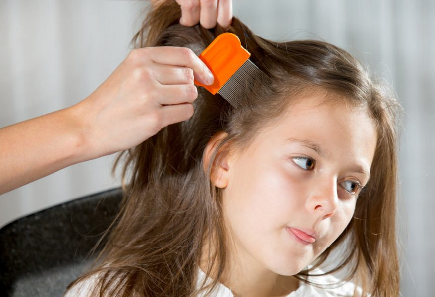 Cure of lice