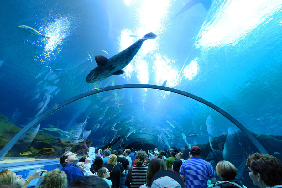 Top 10 Magnificent Aquariums of The World