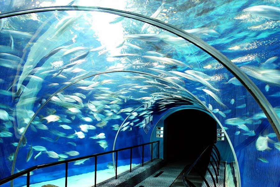 Shanghai Ocean Aquarium, China