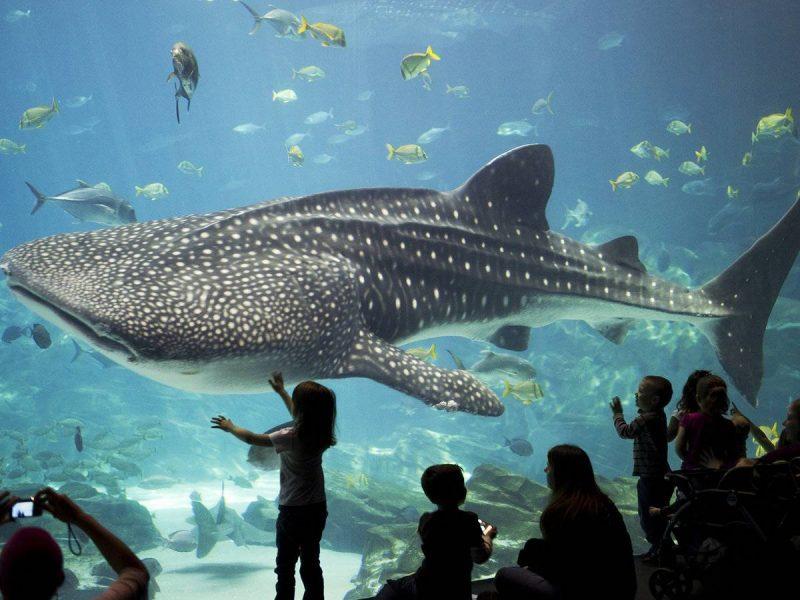 Georgia Aquarium, Georgia