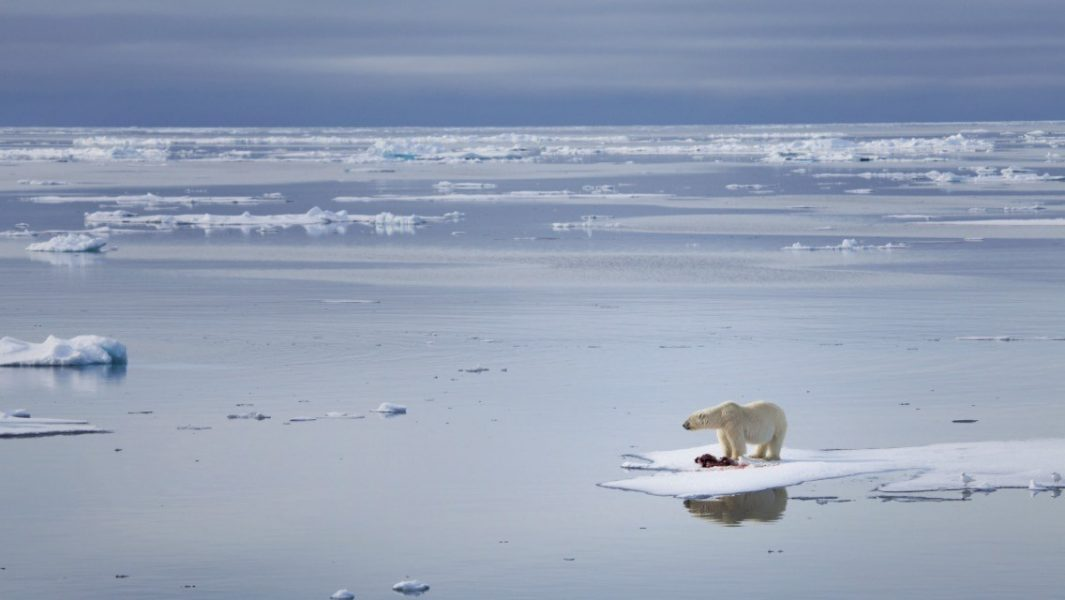 Melting Speed Arctic Ocean Would be Ice-Free by 2040