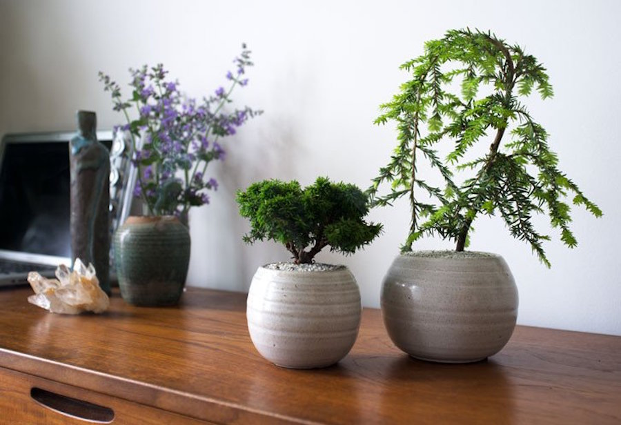 Indoor plants for fresh air