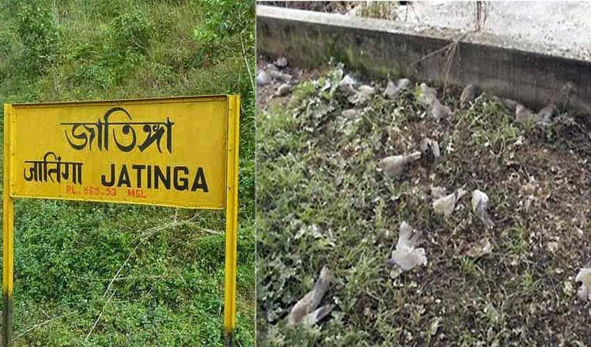 Jatinga village - Suicide point for birds
