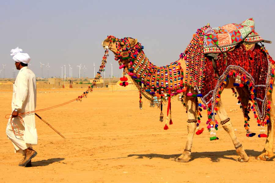 Explore Whole Jaipur on a Camel Ride