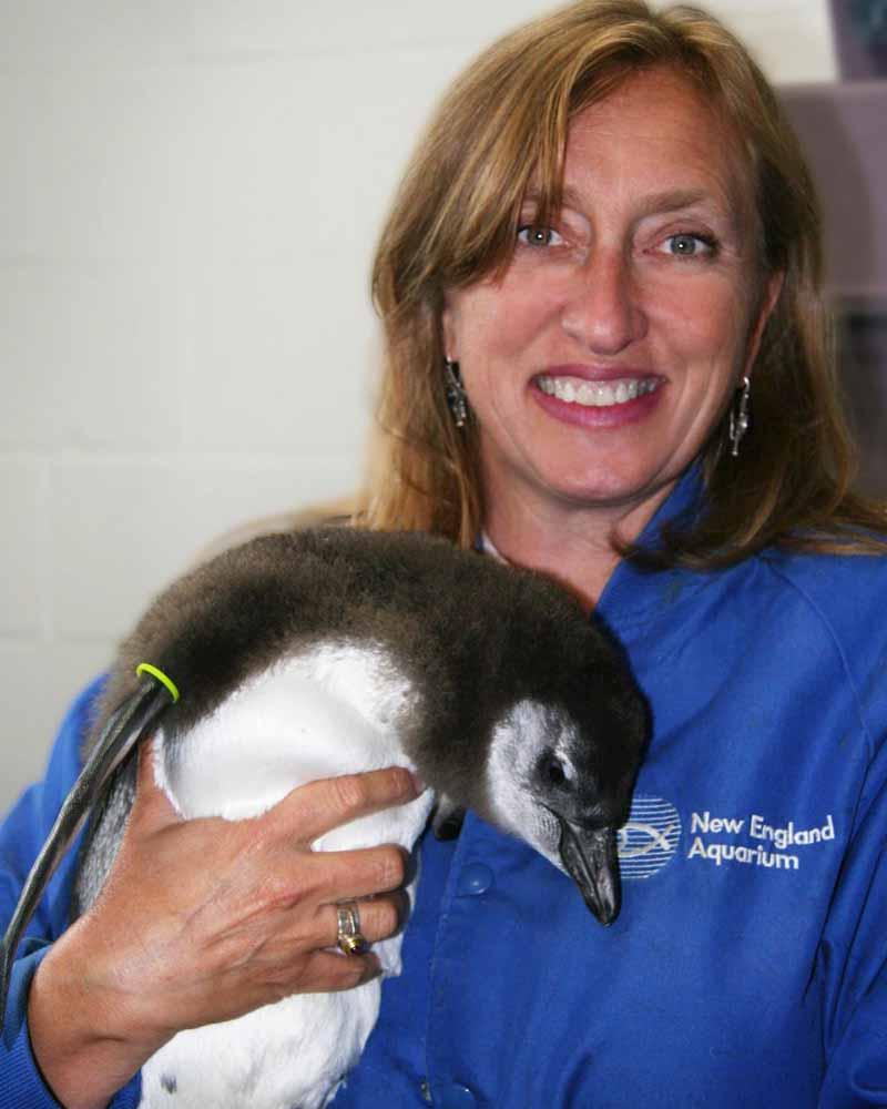 A deadly silence of penguin