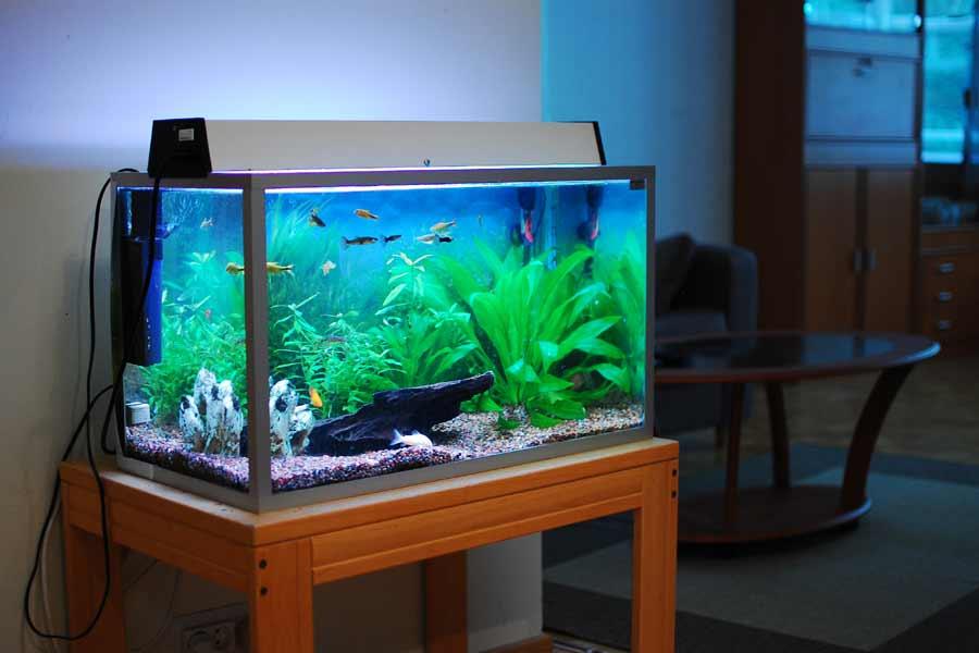 Removes algae from aquarium