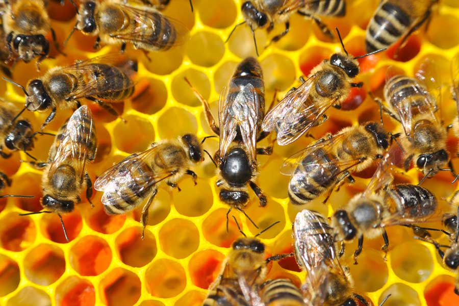 Interesting Facts About Honey Bees