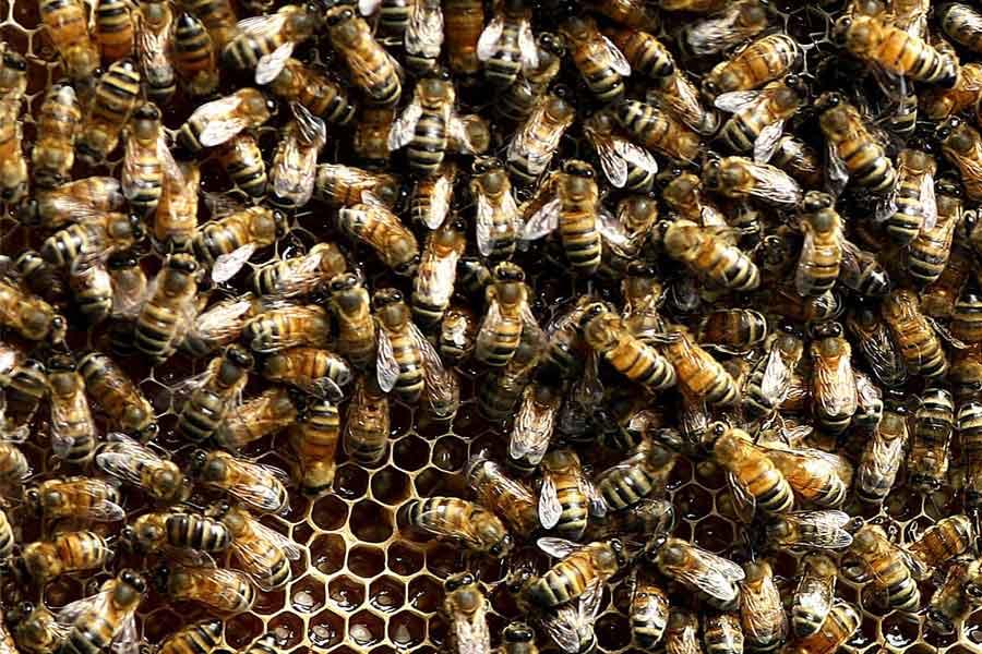 Bees don't need a GPS