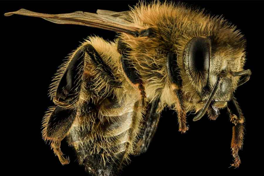 Bees are good at recognising human faces