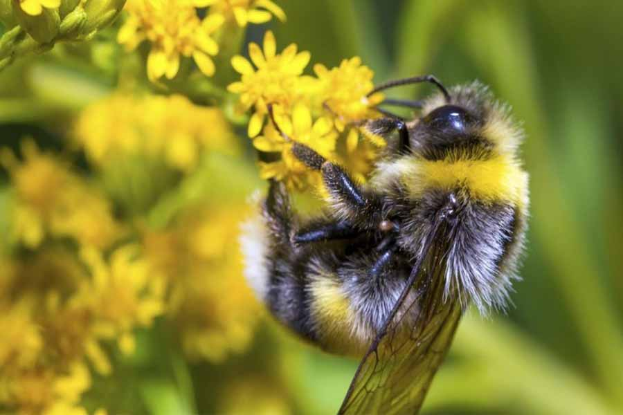 Bees are essential for our existence