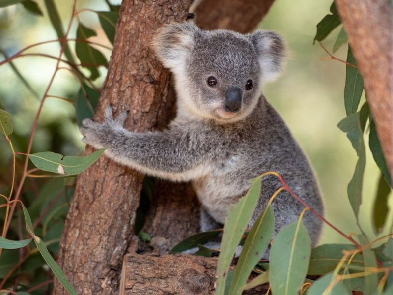 Cute animals are surprisingly violent