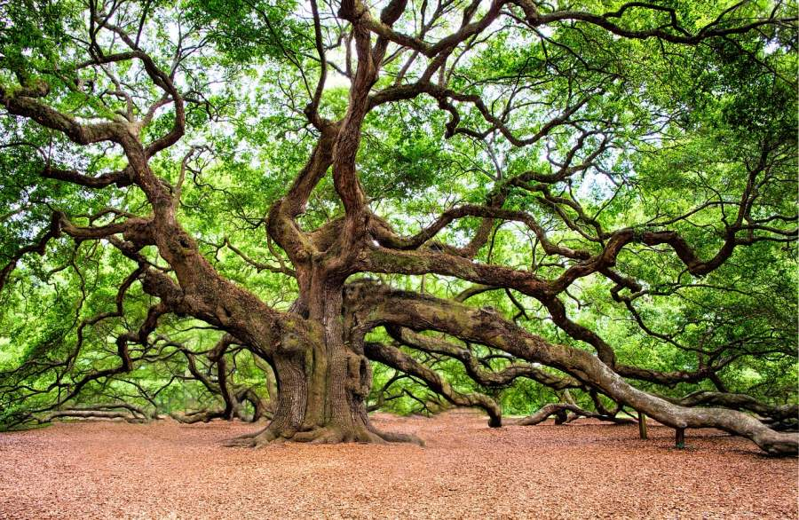 What Trees Do For Humankind