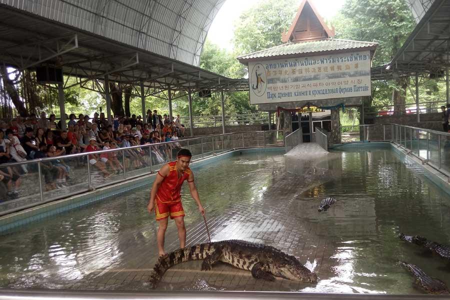 Crocodile Farm, Thailand