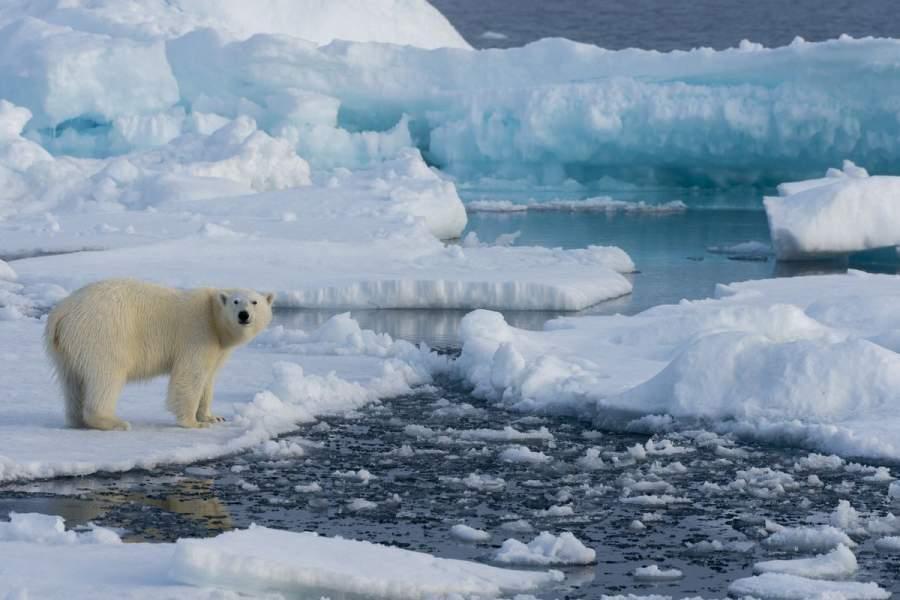 Arctic is Melting
