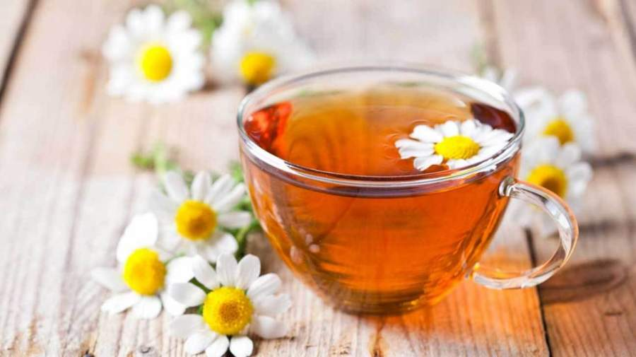 What is So Special About Egyptian Chamomile