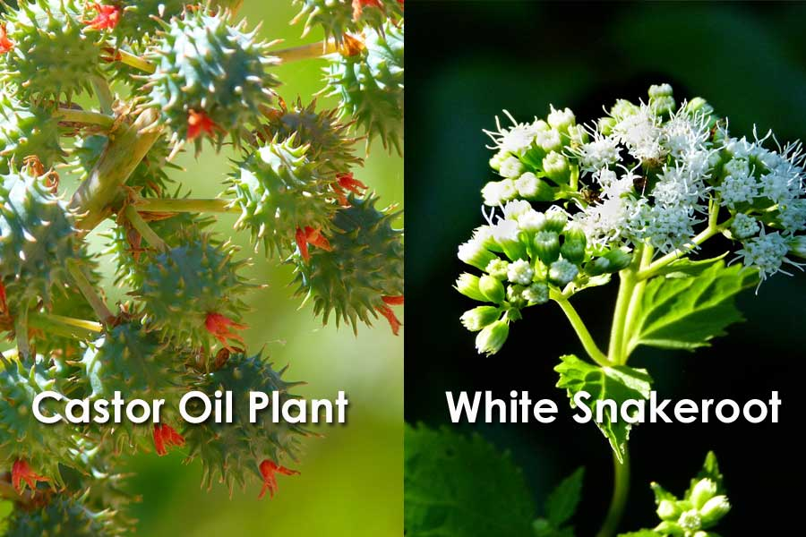 7 of The Most Deadly Plants