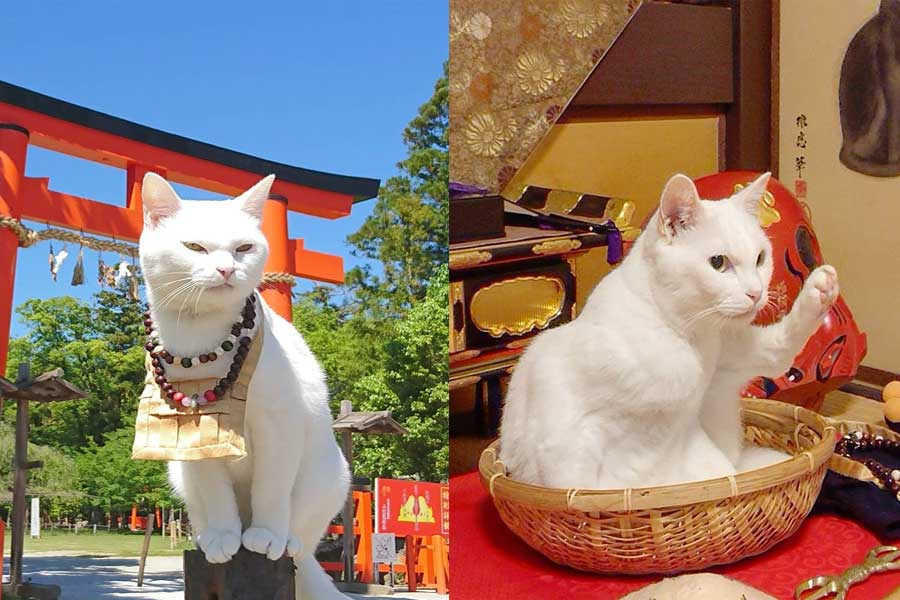 Don't Forget to Visit The Most Famous Cat Shrine in Japan