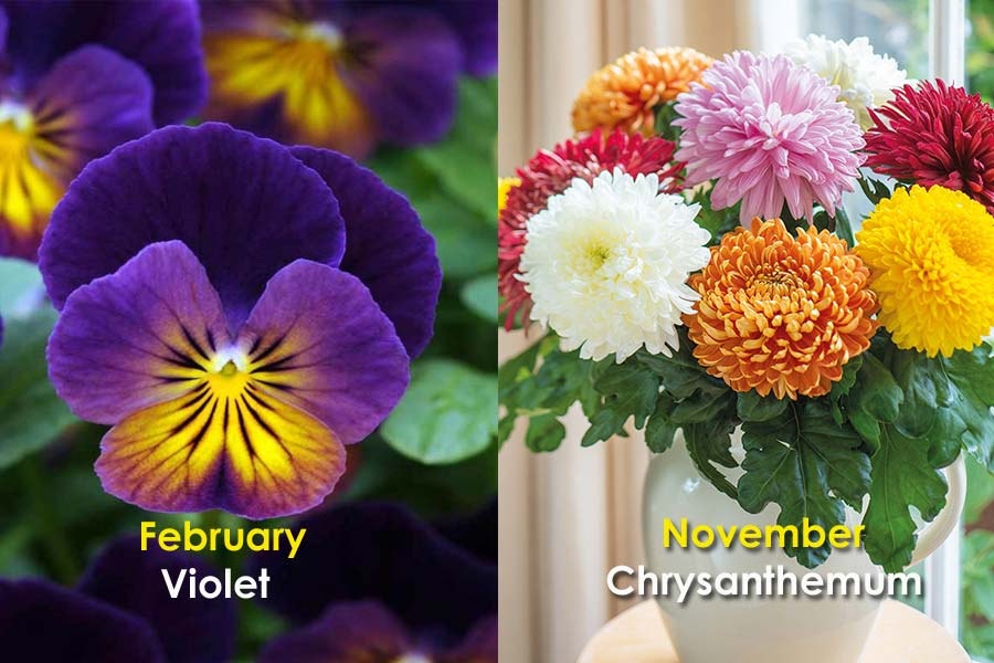 Birth Flowers That Define Your Consequent Personality Traits