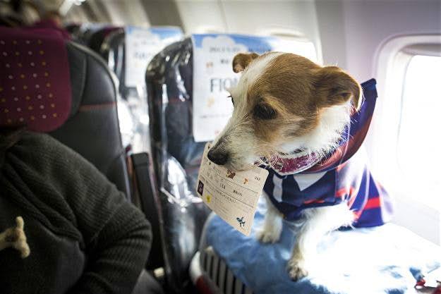 Plan your flight carefully