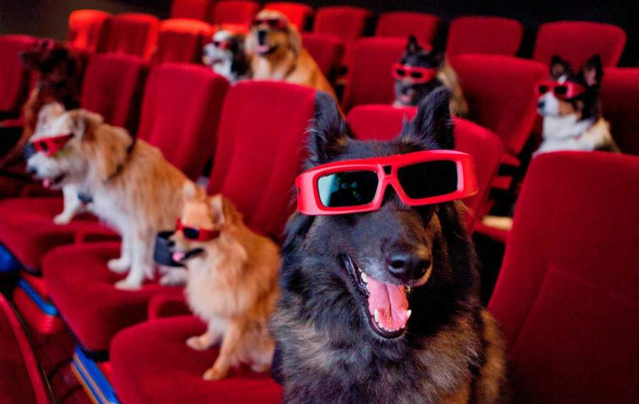 5 Reasons Telling You Why Directors are Dying To Work with Dogs