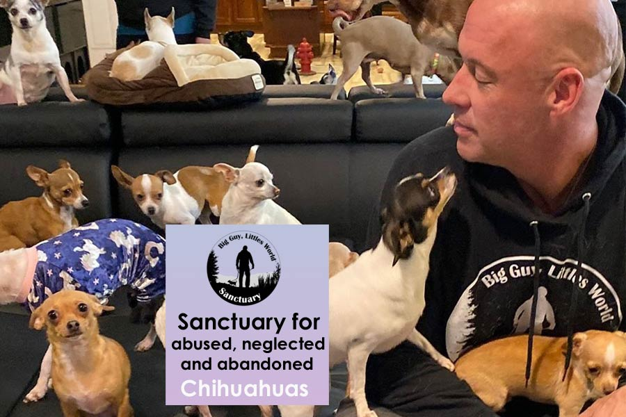 Bobby Humphreys Rescues Chihuahuas in His Big Guy Littles World Sanctuary