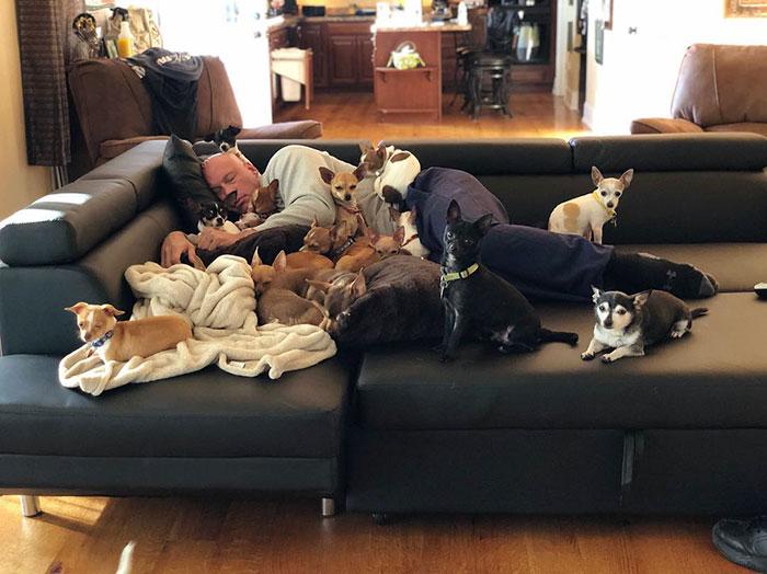 Bobby Humphreys Rescues Chihuahas