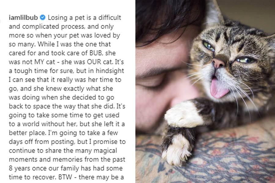 Internet's Most Beloved Cat Lil Bub Dies