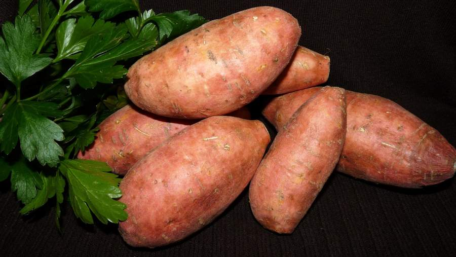 Water Content in sweet potato
