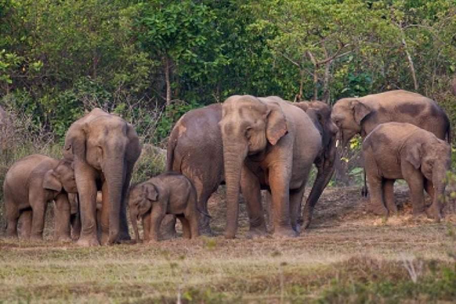 jharkhand Elephant Corridor