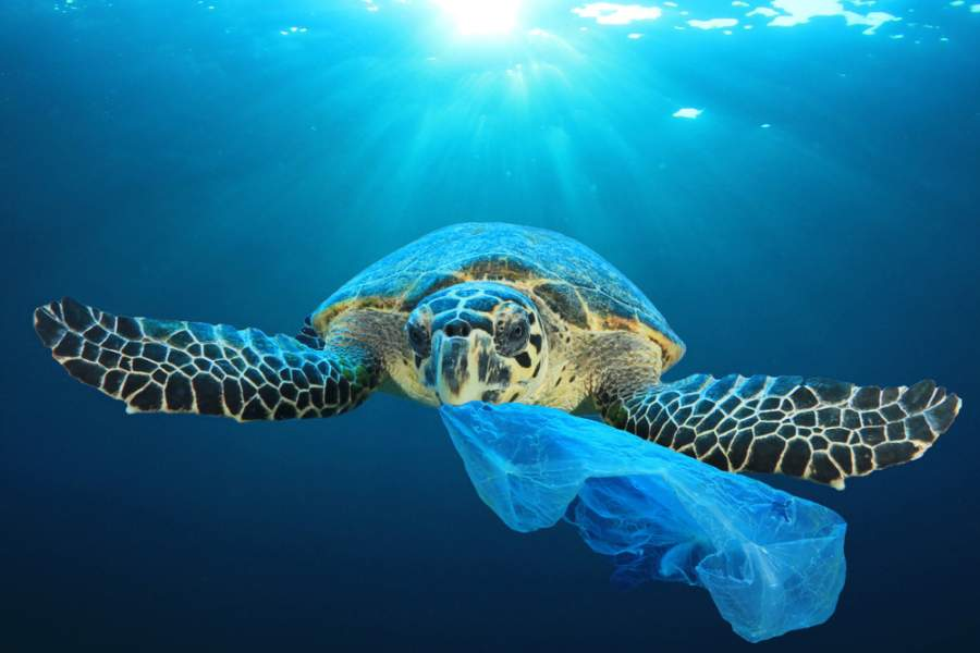 Caribbean countries Banned The Single-Use Plastic