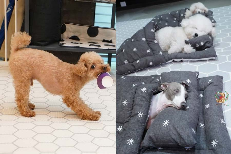 Day-care Doggos South Korea