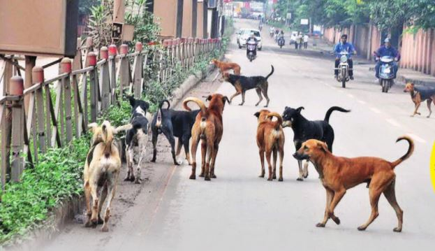 AMC caged the stray dogs and nilgais