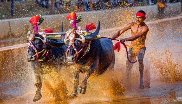Srinivasa Gowda Buffalo Racer