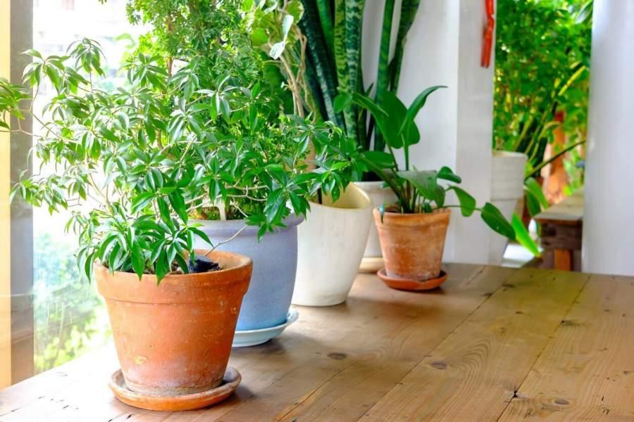 Brings Flowers and indoor plants inside
