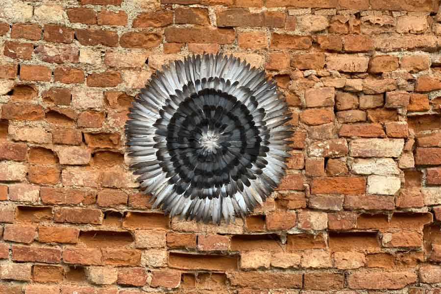 eye in a wall, Found feathers