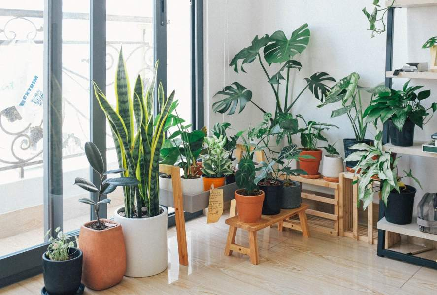 9 Indoor Plants That Need Less Care