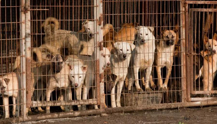 Dog Meat banned in Nagaland