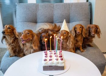8 Awesome Reasons to Throw Your Dog a Party