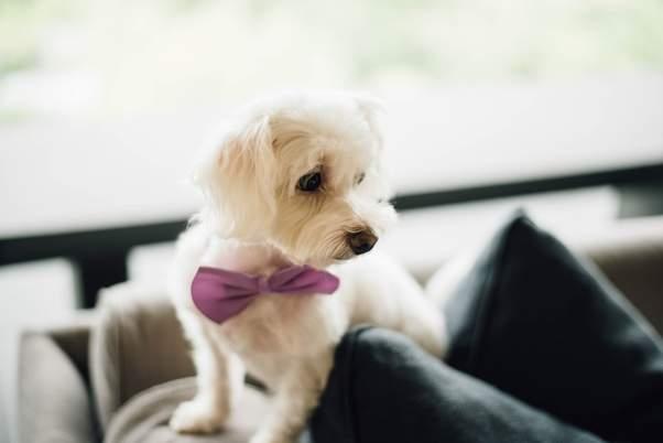 Canine Weddings