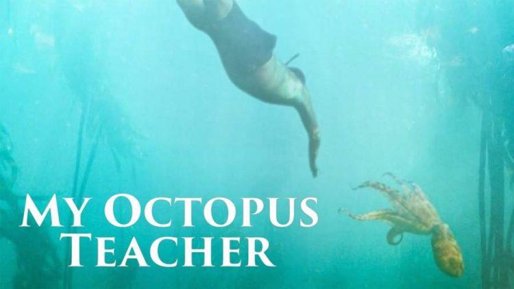 My Octopus Teacher Netflix film review