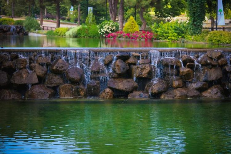 Build The Ultimate Quality Pond