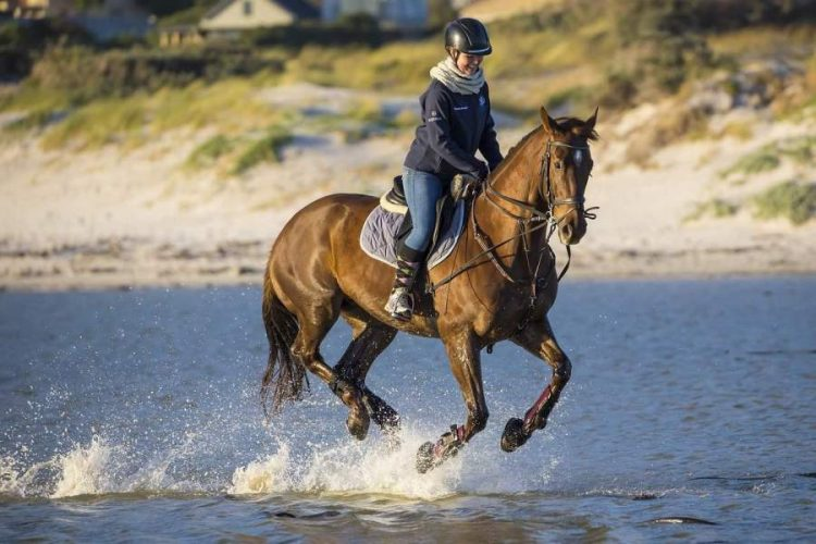 How to Prepare for Your First Off-Track Horse Ride