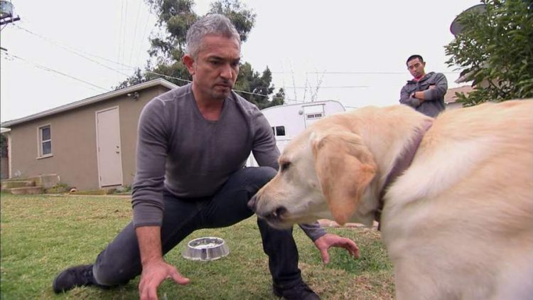 What Cesar Millan Gets Wrong About Dog Bites