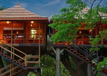 5 Best Tree Houses in Kerala