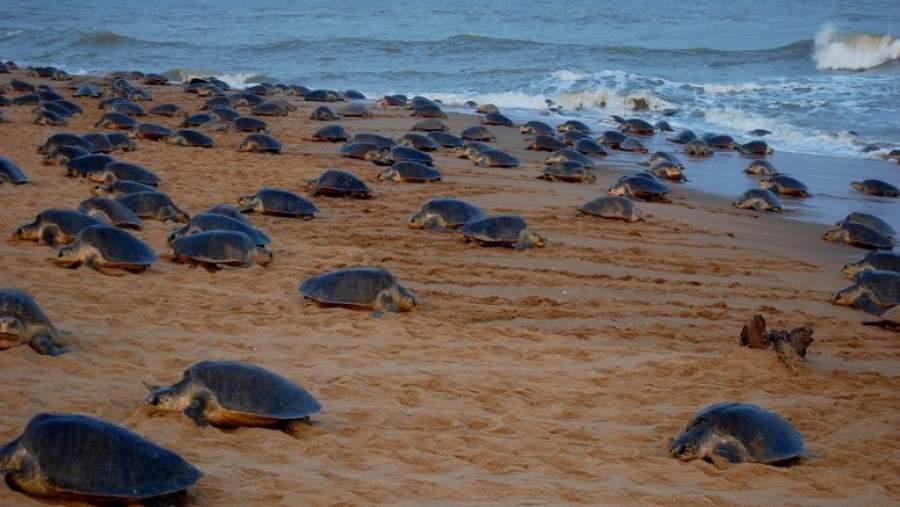 Gahirmatha Marine Sanctuary