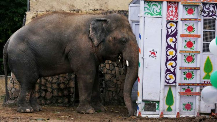 Cher Helped The 'World's Loneliest Elephant